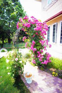 彩がまぶしいお庭